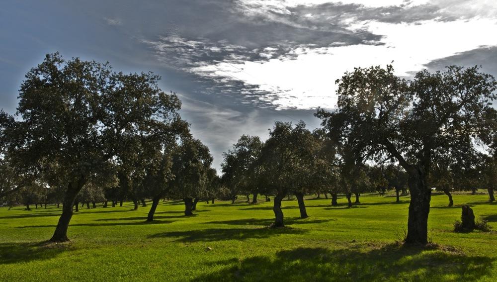 Encinas de la Península Ibérica