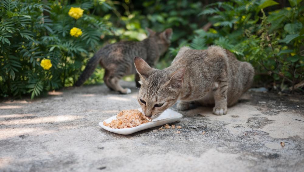 Gato callejero comiendo en la calle
