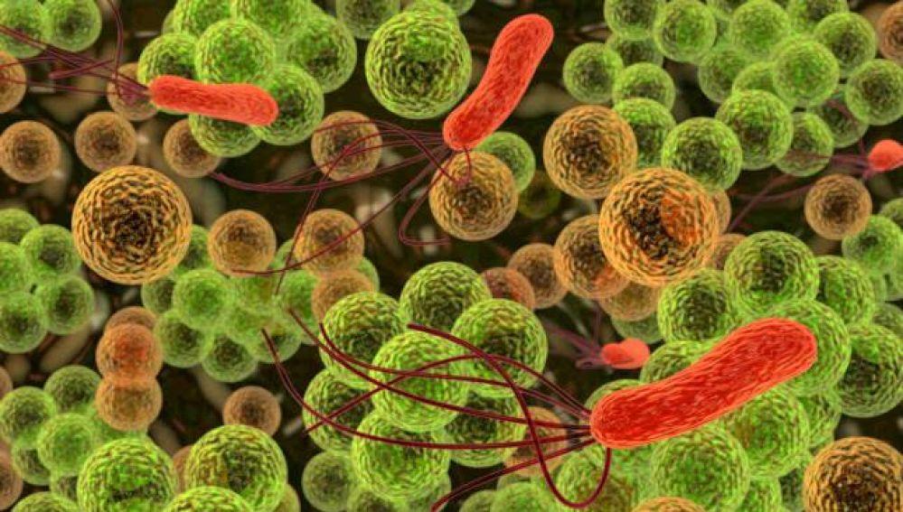 Microbios vistos a través de un microscopio