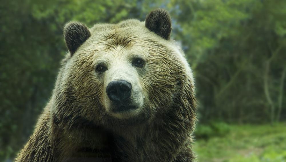 El oso 'Yogui' sale del Parque de Yellowstone de la lista de especies amenazadas