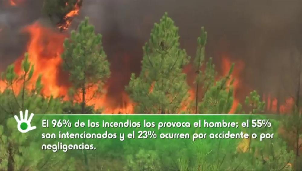 El 80% del presupuesto en la lucha contra los incendios se invierte en extinción frente al 20% en prevención