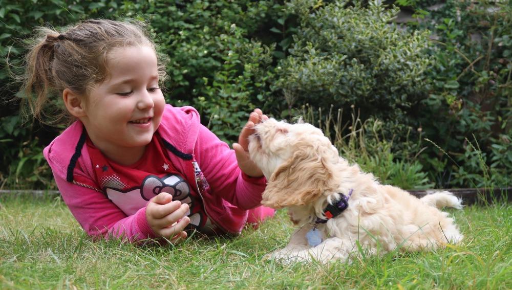 10 razones para tener una mascota