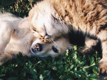 Las autoridades de Miami prohíben la venta de cachorros