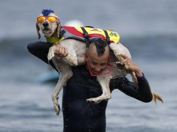 ¡Los perros también surfean!
