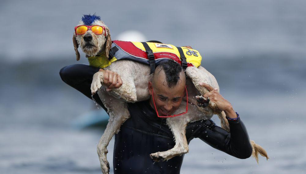 Competición mundial de surf para perros