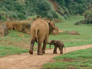 Elefante africano junto a su cría en el Parque de la Naturaleza de Cabárceno