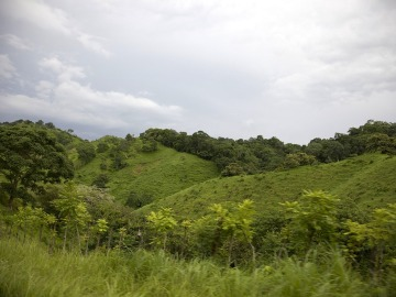 Panamá busca reforestar un millón de hectáreas en 20 años