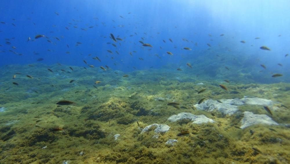 Estudian el fondo marino del mar menor para recolonizarlo hazte eco - Fotos fondo del mar ...