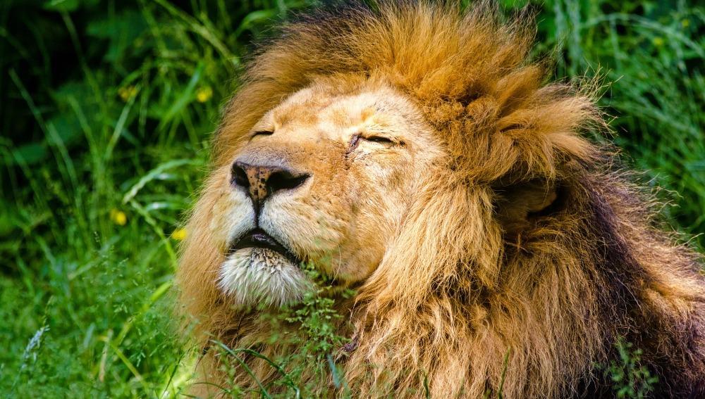 10 de agosto, Día Internacional del León