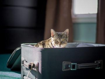 Las mascotas deben viajar con su documentación