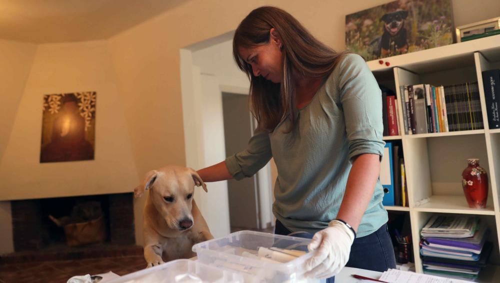 Entrenan a un perro que puede detectar el cáncer de pulmón