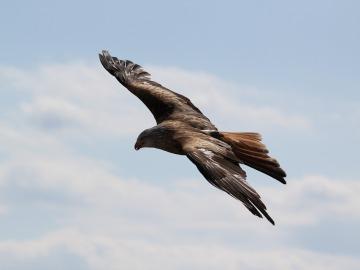 Imagen de archivo de un ave