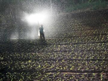 Las aguas se contaminan con un uso inadecuado de pesticidas