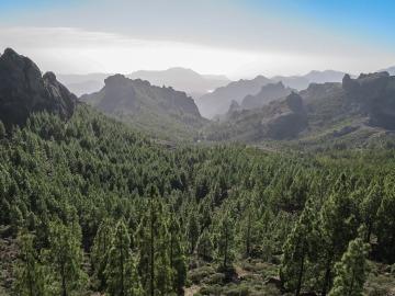 Bosque Canarias