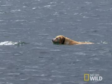 Un perro se baña en el mar, cada día, para jugar con su amigo delfín