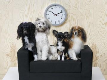 Ikea lanza una colección de muebles para perros y gatos