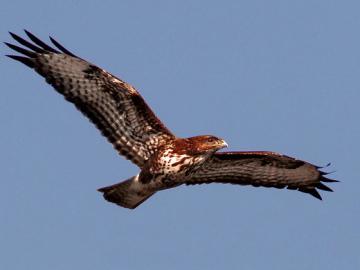 La captura y la caza ilegal amenazan todavia a las aves silvestres de Europa