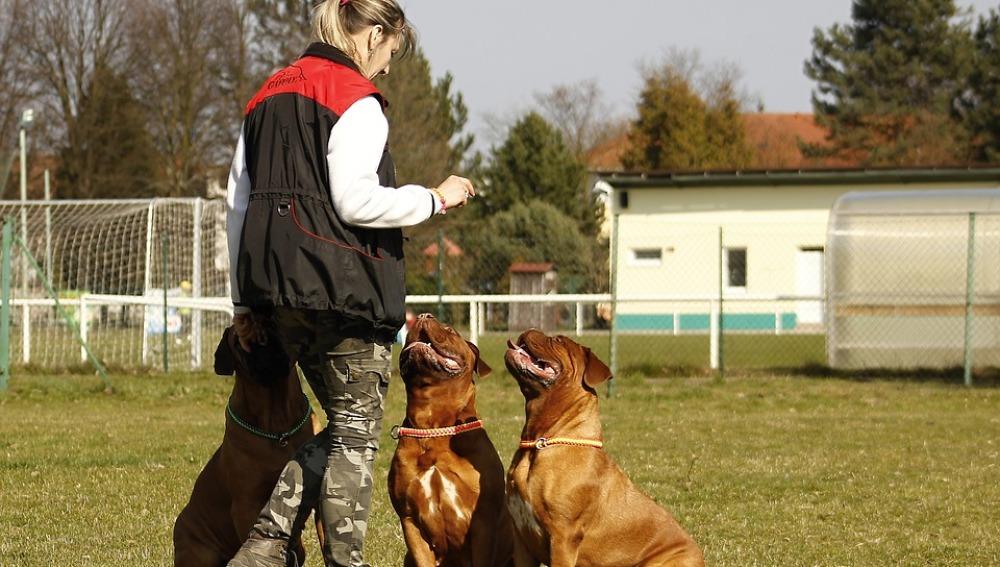 Perros adiestrados son capaces de detectar las crisis epilépticas antes de que se produzcan