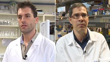 Arkaitz Carracedo y David Sancho comparten el premio joven talento en investigación biomédica