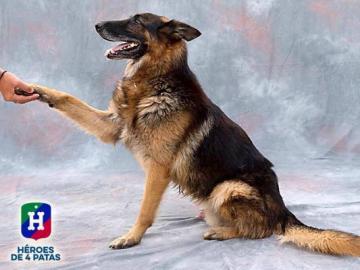 Thor, uno de los perros adoptados este año