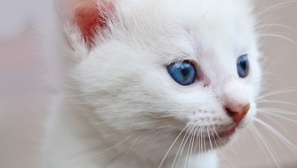 Piden seis meses de prisión para un empleado de un hotel por maltratar a un gato