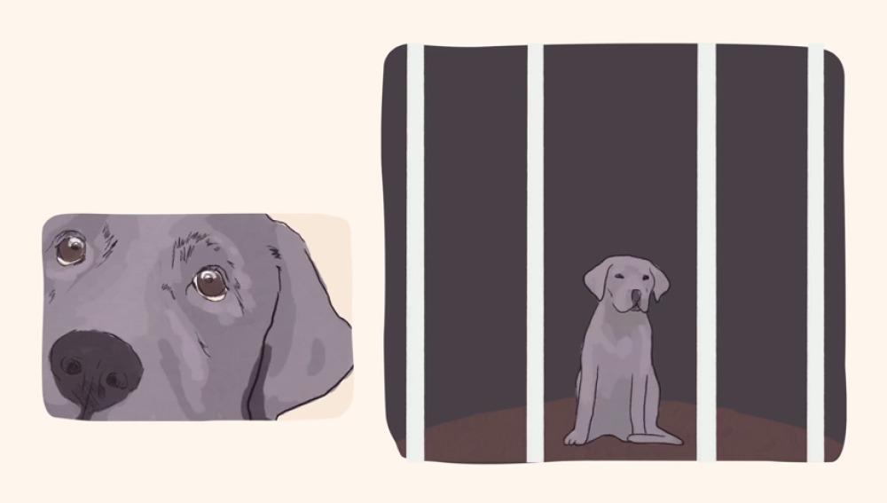 Una iniciativa promueve la adopción de mascotas y recuerda que no son un juguete