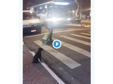 Este perro da una lección de seguridad vial a conductores y peatones