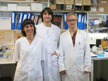 Identifican un receptor clave para combatir la metástasis en el cáncer de ovario