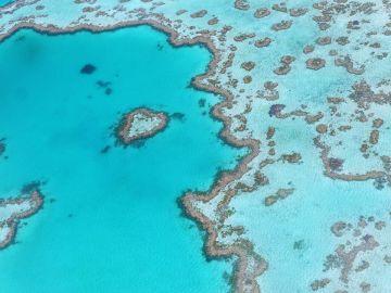 Australia destinará 48 millones de dólares para proteger la Gran Barrera de Arrecifes