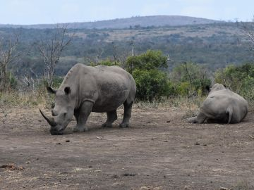 Foto de archivo de un rinoceronte