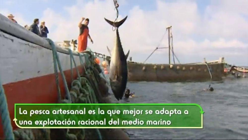 En España, cada semana se tiran a la basura alrededor de 1,3 kilos de alimentos por hogar