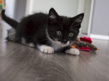 Gato negro | Imagen de archivo