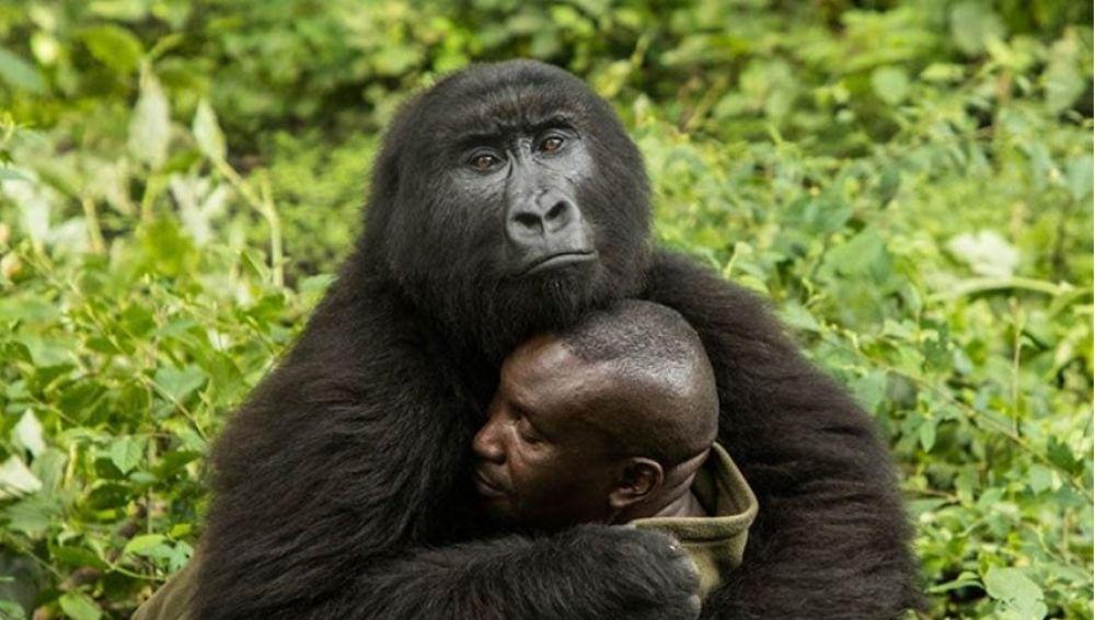 Un gorila abraza a su cuidador