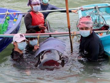 Muere una ballena en Tailandia tras tragarse ochenta bolsas de plástico