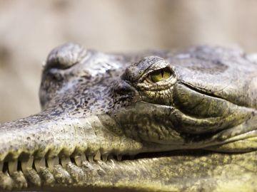 España es 'clave' en el tráfico ilegal de especies que amenaza a la biodiversidad