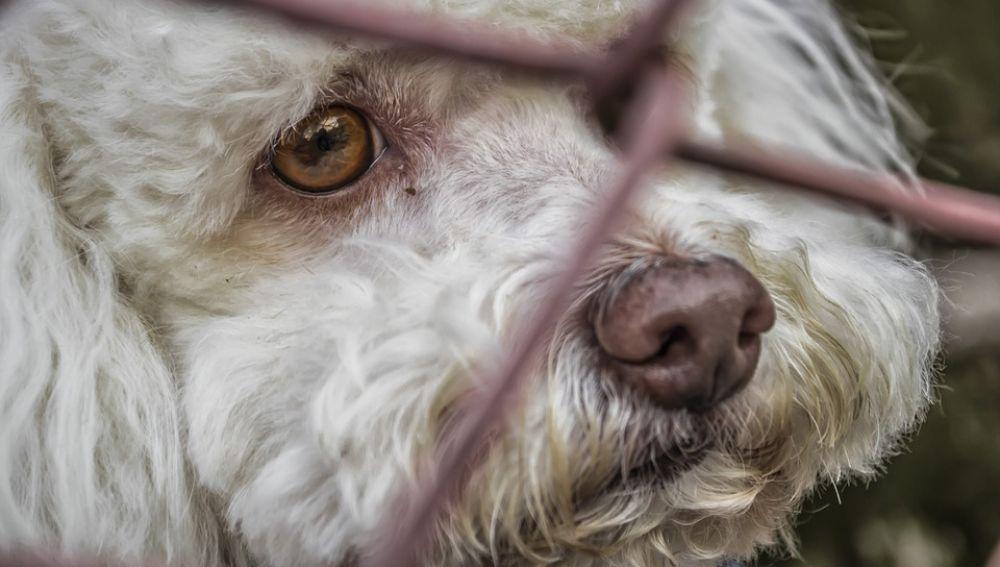 'Vacaciones para todos', la nueva campaña de la Comunidad de Madrid en contra del abandono de mascotas en verano