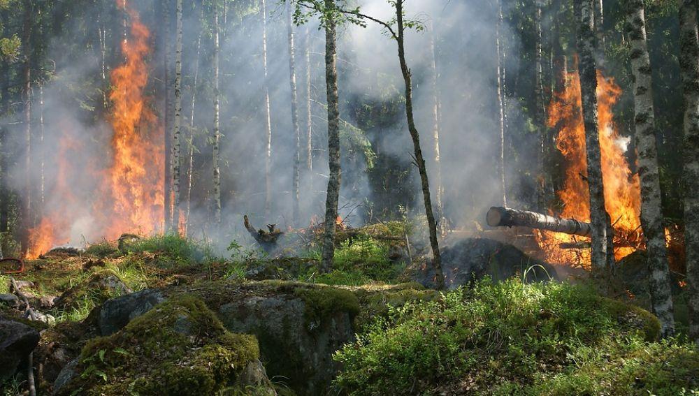 Expertos insisten en la necesidad de prevención frente a la extinción de incendios