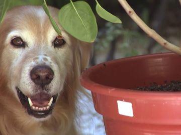 Las casas de acogida, fundamentales para que los animales abandonados encuentren un nuevo hogar