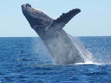 Los cetáceos cuentan con su propia área marina protegida en el Mediterráneo