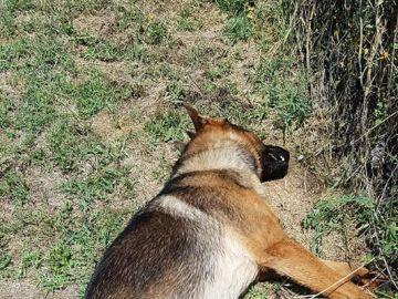 Kaos, el perro que se convirtió en un héroe en el terremoto de Italia