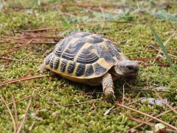 Diez claves para que no te conviertas en cómplica del tráfico de especies en tus vacaciones