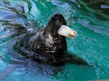 El Zoo Aquarium de Madrid reparte polos a los animales para combatir la ola de calor