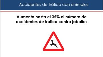 Estudio accidentes con animales