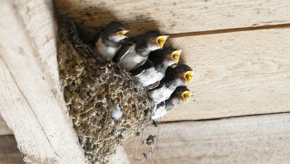 Las denuncias ciudadanas ayudan a evitar la destrucción de nidos