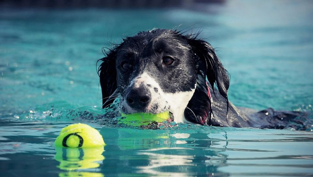 '¡Al Agua Patas!', una iniciativa canina en Madrid para fomentar la adopción