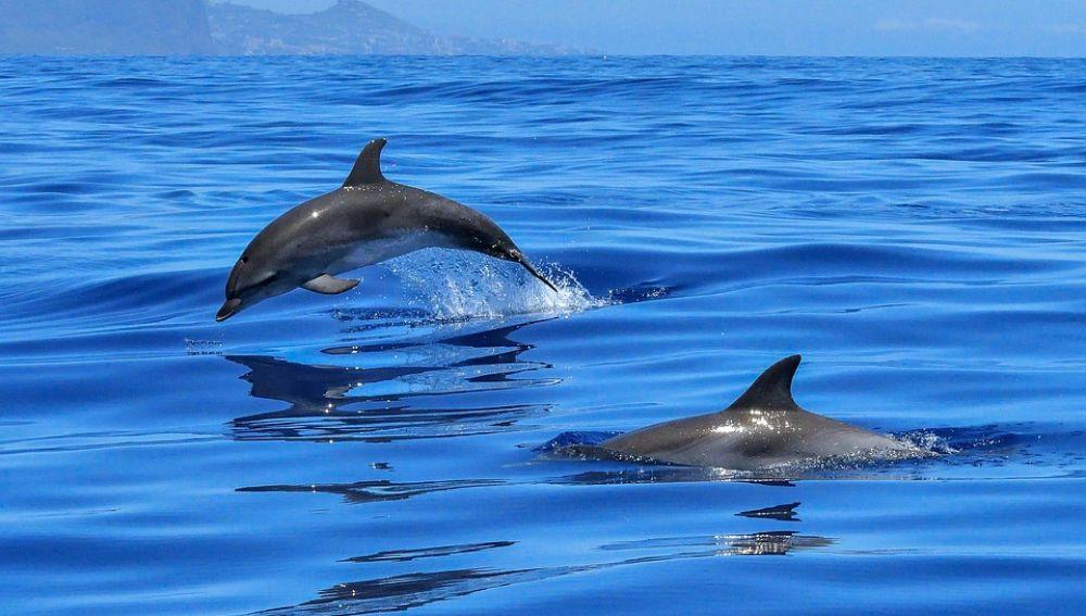 Una variante del virus más letal en delfines llega al Mediterráneo