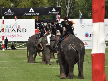 Polo con elefantes