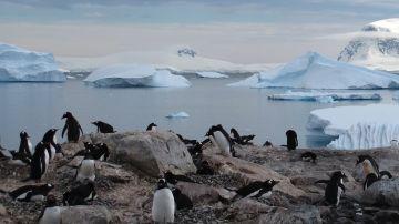 Imagen del océano Antártico