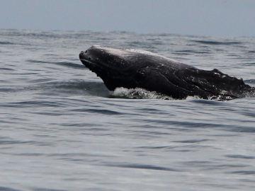 Unas 145 ballenas piloto murieron en Nueva Zelanda tras quedarse varadas el fin de semana en la isla Steward (Rakiura)