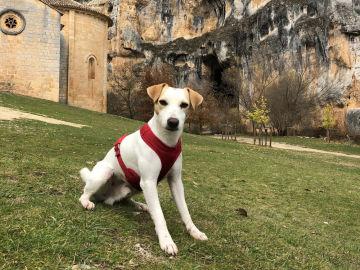 Pipper en Navarra